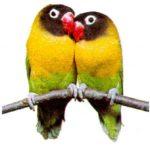 birds-min