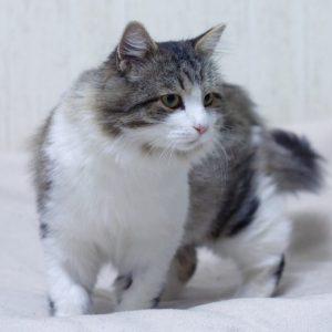 cat-grooming in vaughan